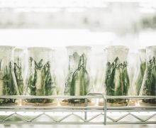 How to secure Funding for Cannabis Testing